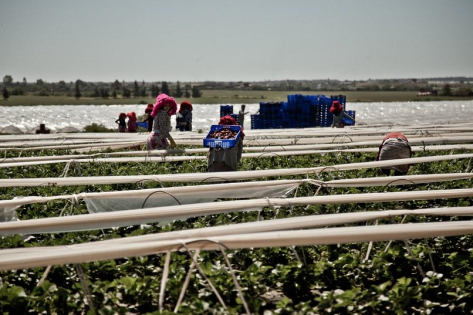En el norte de Marruecos hay 20.000 trabajadoras en el sector de las fresas y OXFAM lucha para que estas tengan unas condiciones de trabajo dignas.