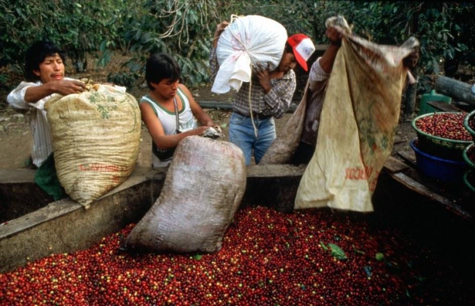 Transforma da apoyo y formación para mejorar la producción de café .