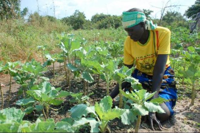 La ONG da apoyo en la reconstrucción de las provincias del Sur de Sudán (reparación de pozos, agua potable, alimentos, saneamiento y necesidades básicas) y ayuda a las personas retornadas y desplazadas.