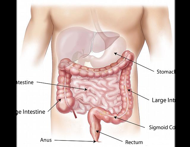 Sistema digestivo del cuerpo humano